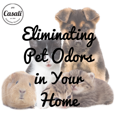 Eliminating Pet Odors in Your Home